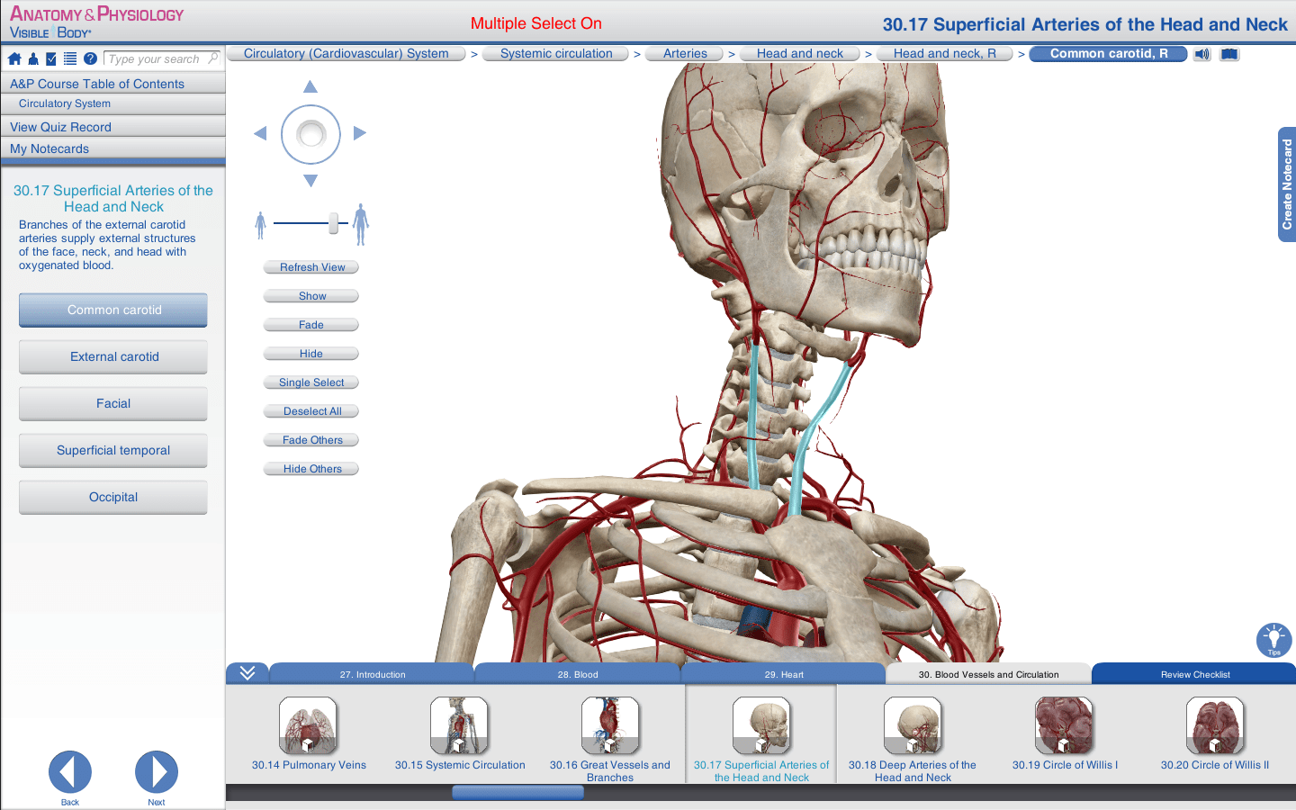 Download Gratis Visible Body Anatomy and Physiology Full Version